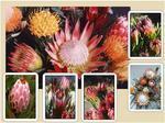 Bouquet Box - Medium (approximately 24-29 Count)