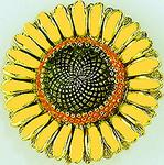 Enameled Sunflower brooch